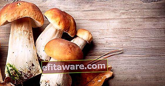 Oggi abbiamo imparato questo: tipi di funghi commestibili e coltivati in Turchia