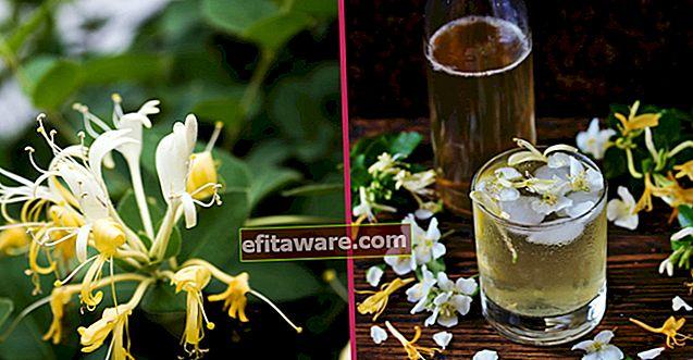 Come coltivare il fiore di caprifoglio a casa, dalla selezione del terreno al tempo di potatura?