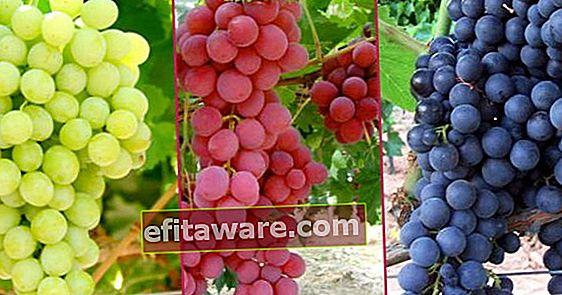 22 tipi di uva che coloro che vogliono lasciare il loro lavoro e coltivare uva dovrebbero conoscere