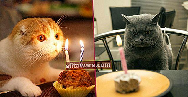 15 glücklich geborene Katzen, die sich genauso um ihre Geburtstage kümmern wie Sie