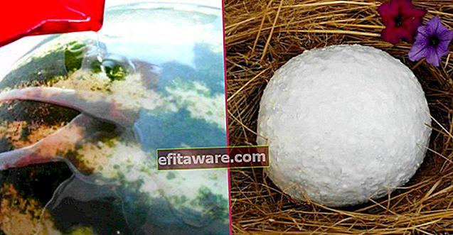 Mangia in inverno: un metodo insolito per conservare le bacche senza rovinarle per 6 mesi