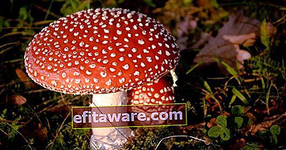 Che cos'è l'avvelenamento da funghi, quali sono i sintomi dell'avvelenamento da funghi?