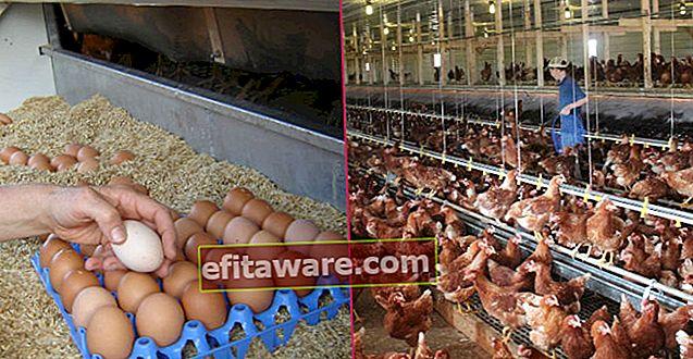 Fatti di mercato che devi sapere sulle uova