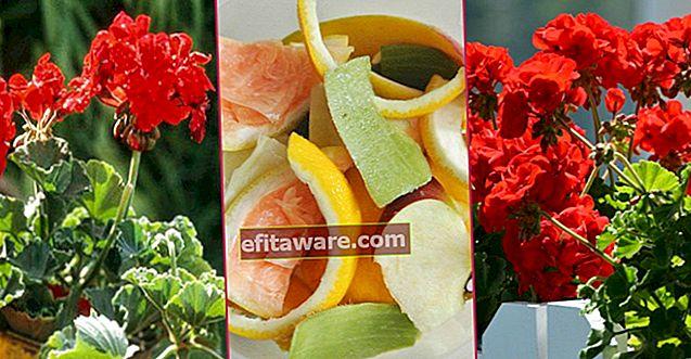 식물에 에너지를 공급하고 발코니에 색과 풍미를 더하는 8 가지 자연적인 방법