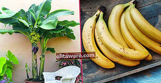 Prepariamo i vasi: come coltivare una banana?